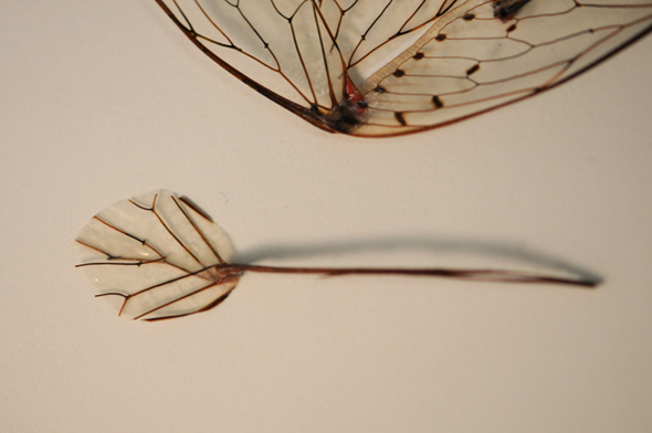 object-cicada-wings-legs-2