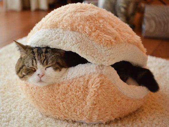 catburger-1