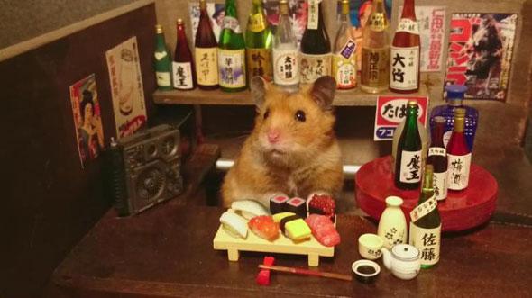 hamster-bartender
