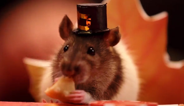 tiny-hamster-thanksgiving