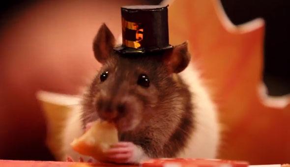 tiny-hamster-thanksgiving