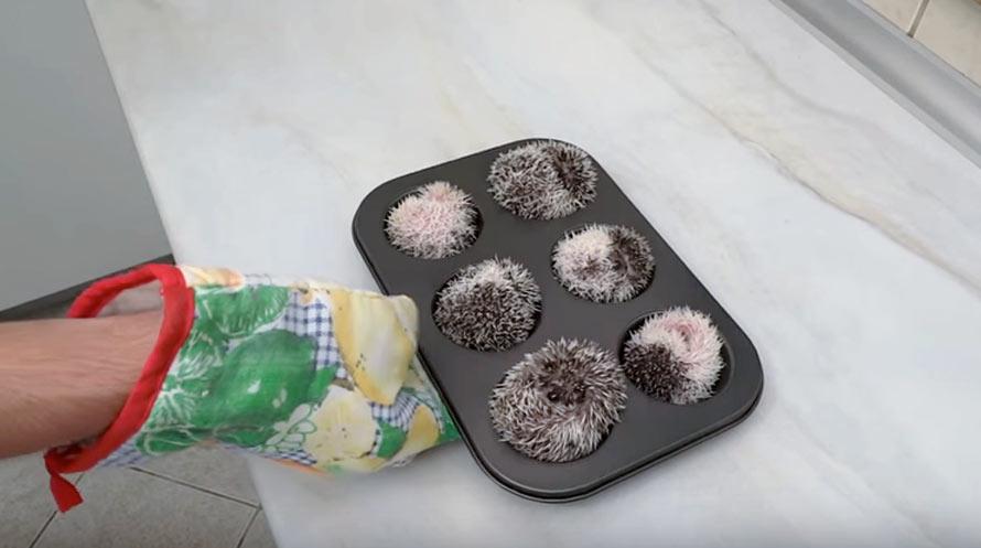 hedgehog-muffins