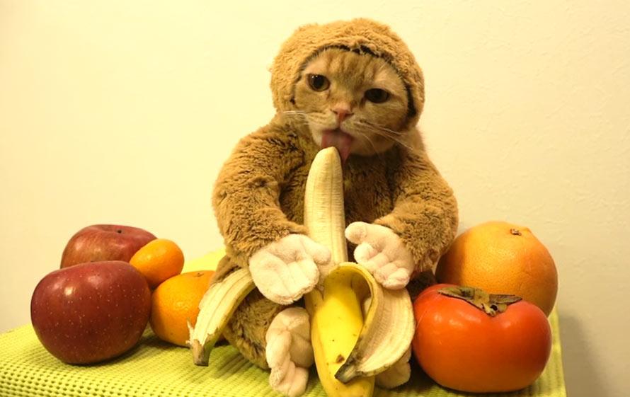 Cat Monkey Banana Gif