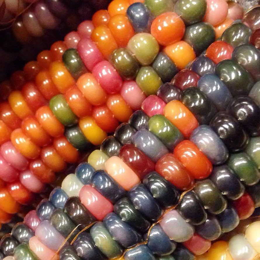 Rainbow Corn Makes For A Colorful Cob | Foodiggity