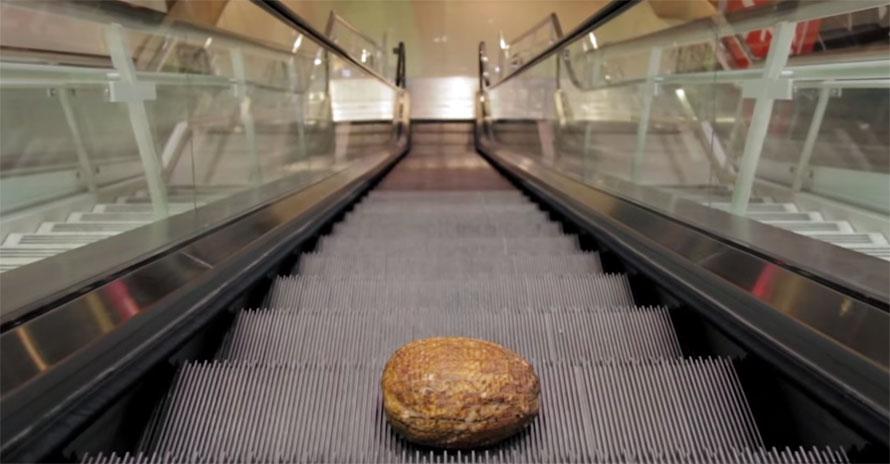 escalator-ham